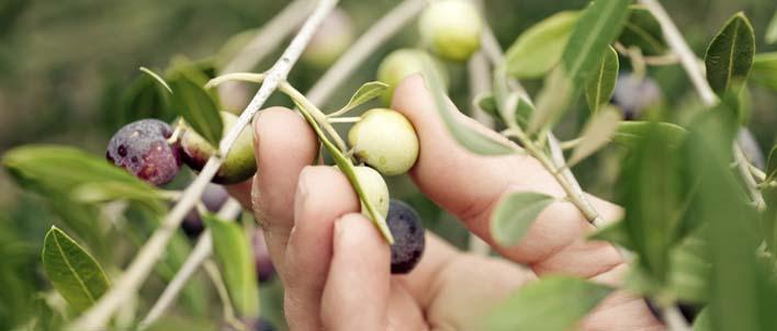 achat huile olive bio